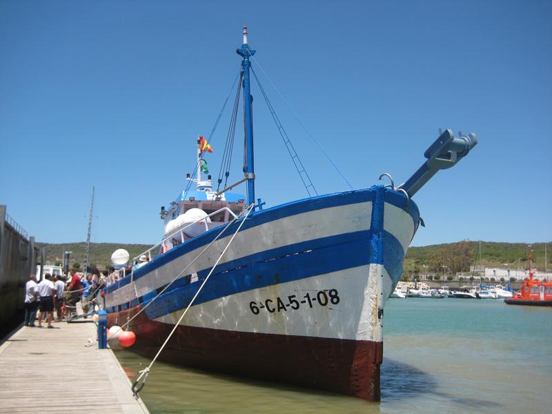Tras la pista del atún en Barbate