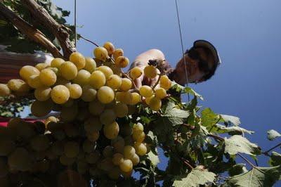 Lo que aprendí con Chano sobre el vino – (II)