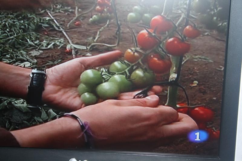 La odisea del tomate