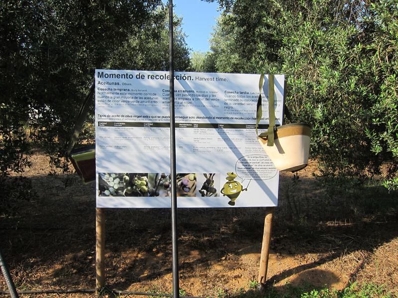 El aceite: recolección y producción