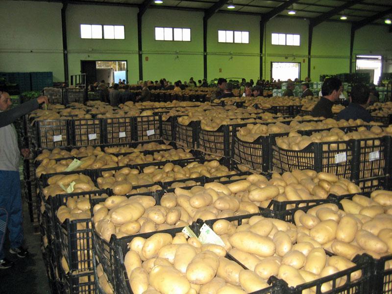 Tortillología: vamos a coger papas a Sanlúcar