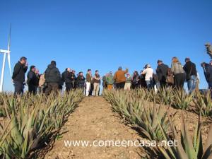 Los Borriquetes Aloevera2