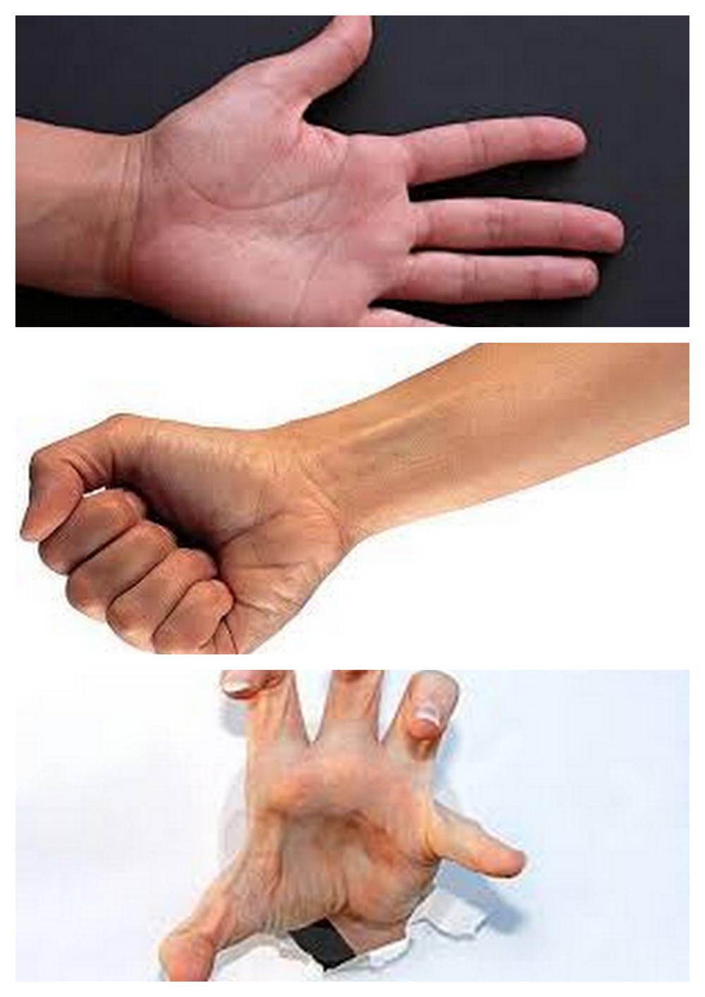 Puño, palma y garra