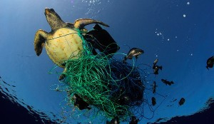 "A turtle is caught in a fishnet trap. The Rainbow Warrior is in the Mediterranean for a three month expedition ""Defending Our Mediterranean"". Greenpeace is calling for the creation of marine reserves in the Mediterranean Sea, as part of a global network covering 40% of our seas and oceans."