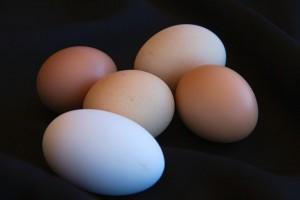 Más cosas sobre los huevos