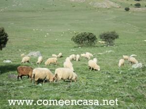 triduo gastro Grazalema III-ovejitas