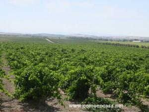 Visita a viñedos y Bodegas Díez Mérito