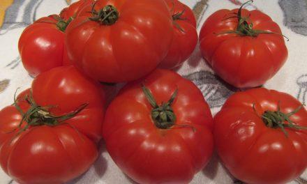 Tomate almeriense con pedigrí
