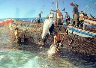Tiempo de atún