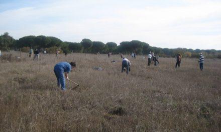 Plantamos arbolitos en Doñana