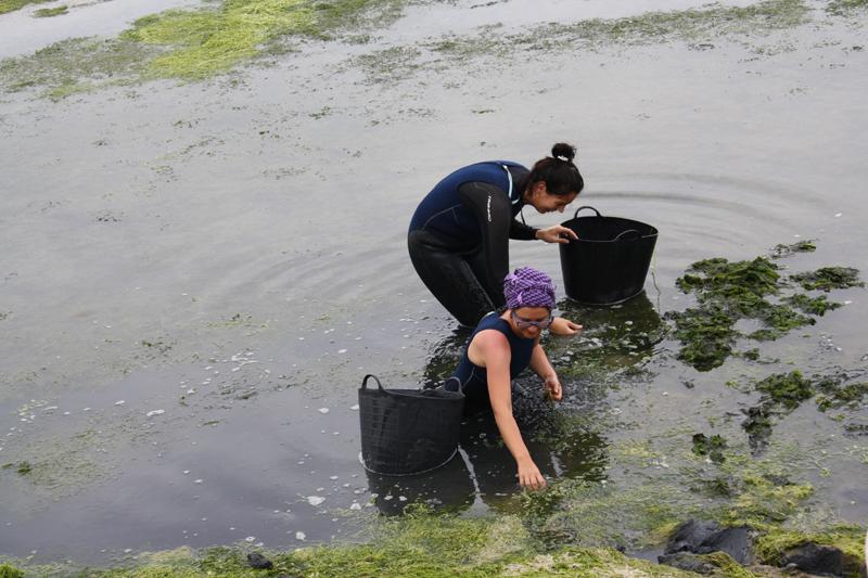 Algas gaditanas: la recogida en el espacio natural