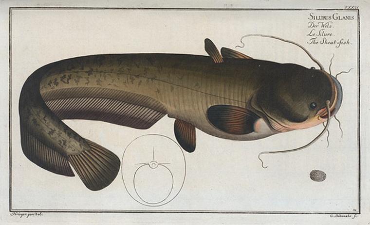 Pescado en el Cádiz del XIX