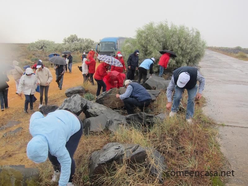 Voluntariado medioambiental en Marismas del Odiel