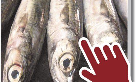 Gastrosur 19, el más pescadero