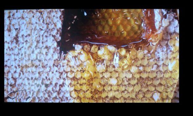La miel: pureza y fraudes